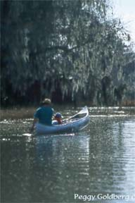 Canoers on Cross Creek
